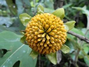 Flor girasol